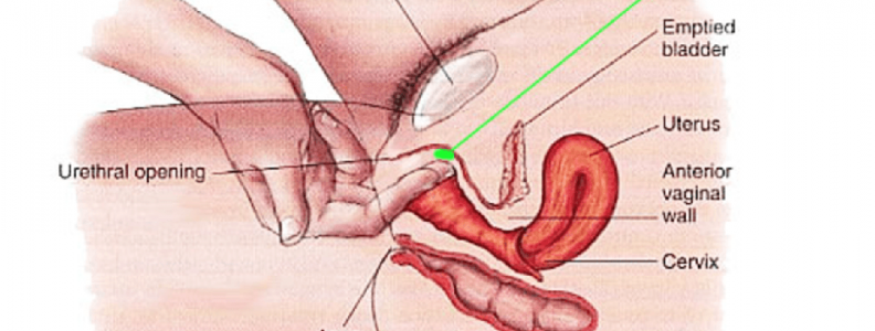Female ejaculation and point G